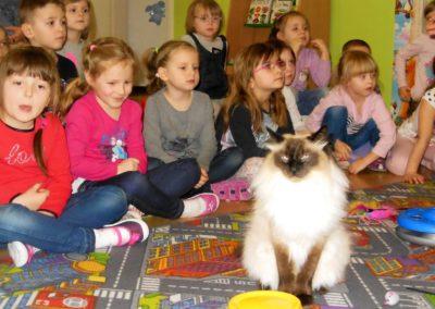 Zajęcia z kotami :)