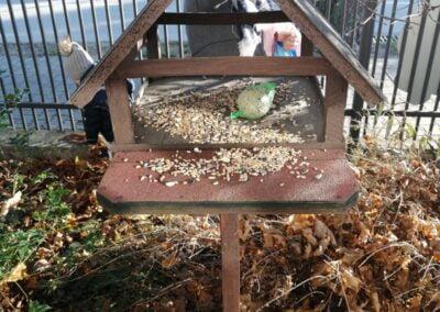 Dzisiaj grupa Sówki znalazła w kalendarzu adwentowym pierwsze zadanie od Świętego Mikołaja – dokarmianie ptaków!
